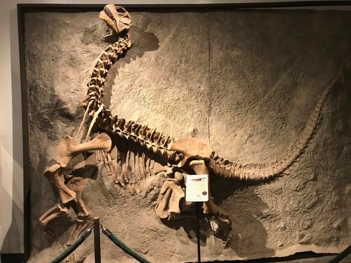 オスニエロサウルス