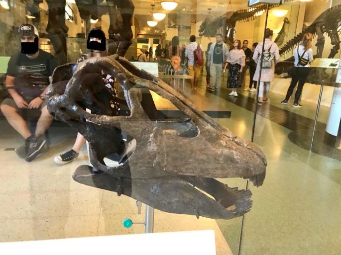 AMNH #6 カミナリ竜ホール – ケラトプスユウタの恐竜旅行ブログ