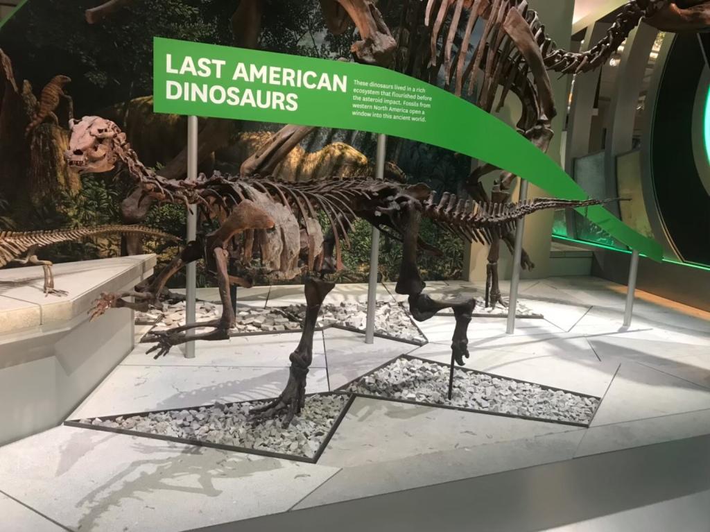 USNM #6 第二、第三のカンプトサウルス – ケラトプスユウタの恐竜旅行 ...